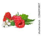 raspberries low poly. fresh ... | Shutterstock . vector #1286893807