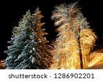Night Forest In The Village Of...