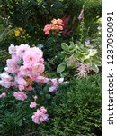 roze v sadu   Shutterstock . vector #1287090091