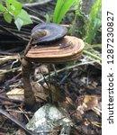 mushroom fungi beauties   Shutterstock . vector #1287230827