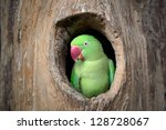 green parrot. | Shutterstock . vector #128728067