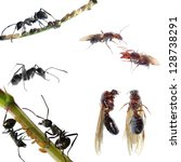 animal set,  ants collection isolated on white background - stock photo