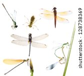animal set, dragonfly and damselfly collection isolated - stock photo