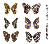 Animal set, butterfly wing collection isolated - stock photo