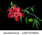 hibiscus coccineus or scarlet... | Shutterstock . vector #1287424864
