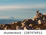 man trail running in winter on...   Shutterstock . vector #1287476911