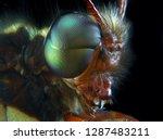 Close Up Extreme Macro Owlfly