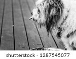 funny black and white shot of... | Shutterstock . vector #1287545077