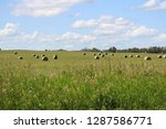 view of hay bales in a field... | Shutterstock . vector #1287586771