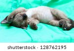 Stock photo small kitty 128762195