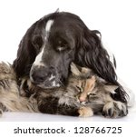 Stock photo english cocker spaniel dog and cat isolated on white background 128766725
