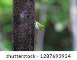 yellow small bird have... | Shutterstock . vector #1287693934