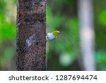 yellow small bird have... | Shutterstock . vector #1287694474