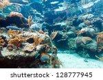 beautiful coral reef in sea ... | Shutterstock . vector #128777945