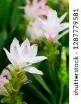 flowers in nature.   Shutterstock . vector #1287779581
