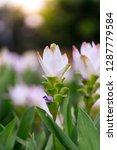 flowers in nature.   Shutterstock . vector #1287779584