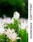 flowers in nature.   Shutterstock . vector #1287779587