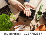 gardening  planting at home.... | Shutterstock . vector #1287782857