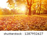beautifull sunny sunset autumn... | Shutterstock . vector #1287952627