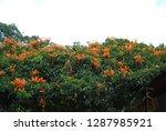 flowers of beauty   Shutterstock . vector #1287985921