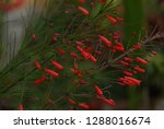 flowers and plant   Shutterstock . vector #1288016674