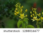 flowers and plant   Shutterstock . vector #1288016677