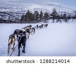 a shot from our husky sledge.... | Shutterstock . vector #1288214014