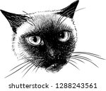 a head of a siamese cat | Shutterstock .eps vector #1288243561