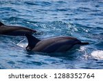 dolphin and family | Shutterstock . vector #1288352764