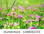 flower nature garden   Shutterstock . vector #1288362151