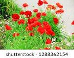 flower nature garden   Shutterstock . vector #1288362154