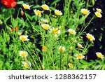 flower nature garden   Shutterstock . vector #1288362157