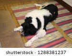 man's best friend  a dog  ... | Shutterstock . vector #1288381237