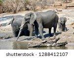 chobe river elephant herd | Shutterstock . vector #1288412107