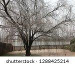 medium wide shot of a willow... | Shutterstock . vector #1288425214
