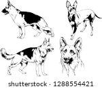 vector drawings sketches...   Shutterstock .eps vector #1288554421