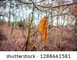 some partially decayed and...   Shutterstock . vector #1288661581
