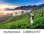 asian woman wearing vietnam... | Shutterstock . vector #1288813747