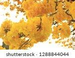 yellow flower  leaves  | Shutterstock . vector #1288844044