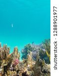 colorful coral reef on the...   Shutterstock . vector #1288901977