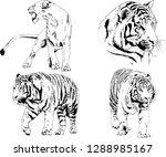 vector drawings sketches...   Shutterstock .eps vector #1288985167