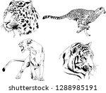 vector drawings sketches...   Shutterstock .eps vector #1288985191
