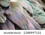 close up of the colorful... | Shutterstock . vector #1288997131