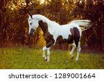 beautiful and sublime stallion... | Shutterstock . vector #1289001664