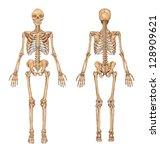 human skeleton from the... | Shutterstock .eps vector #128909621