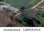 dark plumage on a portrait of a ... | Shutterstock . vector #1289291914
