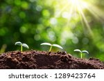 new sprouts on sunny day in the ... | Shutterstock . vector #1289423764