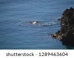 corners of the coast of  cabo... | Shutterstock . vector #1289463604