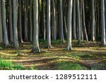 coastal forest on the baltic... | Shutterstock . vector #1289512111