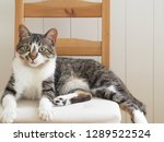 cat sitting on the chair   Shutterstock . vector #1289522524